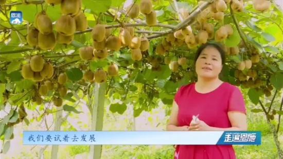 为爱倾注心血壮大猕猴桃产业三农 优质农产品 振兴乡村