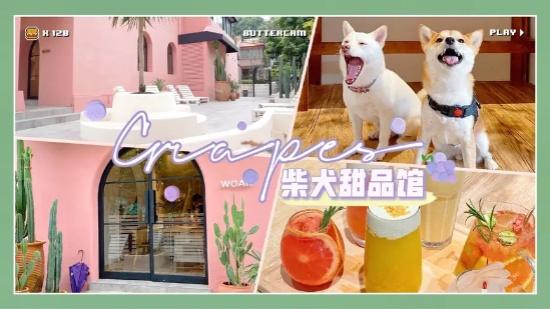 深圳新开了一家柴犬甜品店