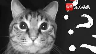 带你旋转体验,监控器视角云吸猫,完了你被猫盯上了!