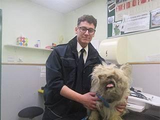 小狗全身毛发缠绕 兽医用3套剪刀剃掉4斤毛发