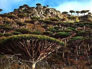 世界上最怪异的十种树!一树一世界